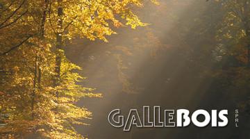 logo-gallebois
